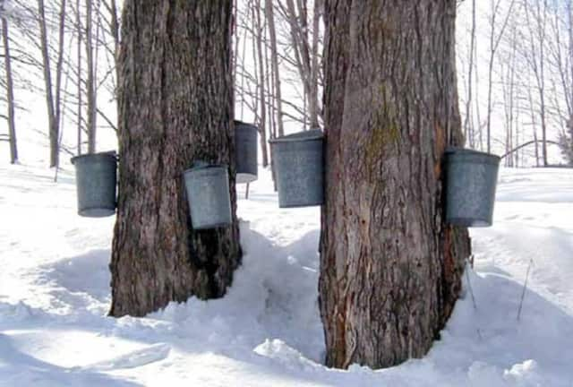 Children of all ages will learn about American Indian sugaring.