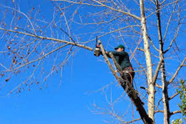 PSE&G will be pruning trees in Leonia that interfere with power lines.