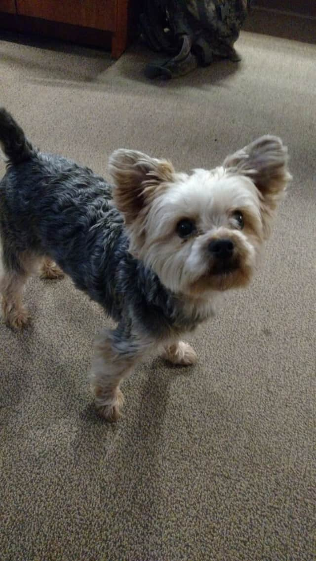 This small dog was recovered near the Maywood Library Sunday.