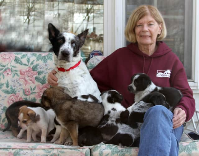 """The Town of Mount Pleasant recently enacted a local law banning """"puppy mills"""" within the town. Prospective cat and dog owners can turn to licensed breeders or shelters like Harrison's Pet Rescue for new pets."""