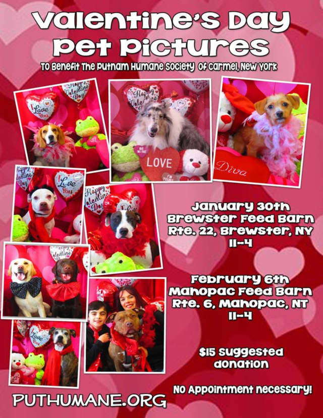 Putnam Humane Society will offer Valentine's Day photos for pets.