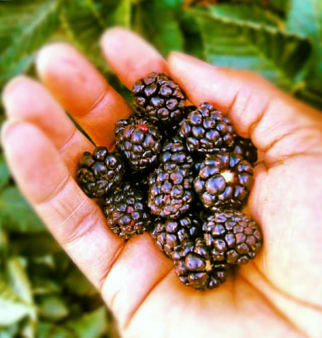 Blackberries help prevent cancer and heart disease. They also aid in lowering blood pressure and retaining memory.