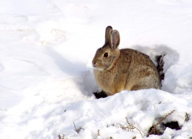 Children are invited to learn about the winter habits of animals with Master Gardeners from Cornell Cooperative Extension at the West Nyack Free Library.