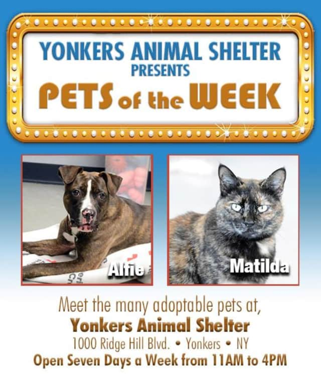 Yonkers Animal Shelter is featuring these pets of the week.