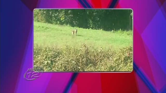 A possible wolf or coyote was spotted near Tuckhoe Road in Yonkers Tuesday.