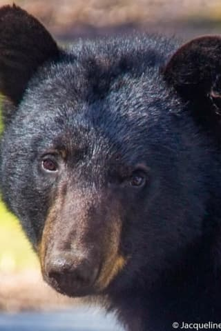 Bear Facts: Here's What To Know As Sightings Start Up Again