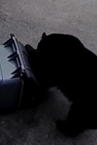 They're Back: Black Bear Spotted Off Route 22