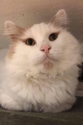 Need A New Best Friend? Westchester SPCA Highlights Pets Of Week