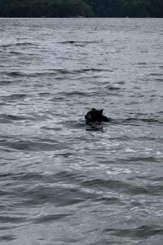 Photos: Fisherman Recounts Close Encounter With Black Bear In Candlewood Lake