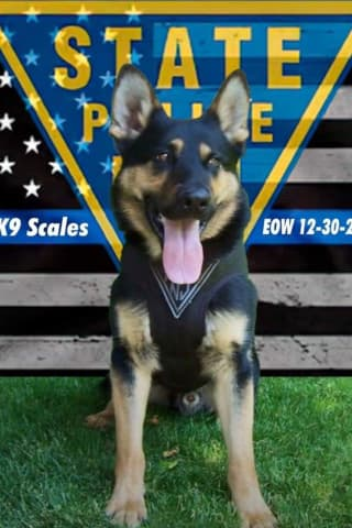 State Police Mourn Loss Of K-9 Who Sniffed Out Bomb Threats Across NJ