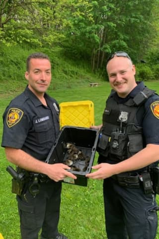 Ducklings Stuck In Storm Drain Rescued By Police Officers In Area