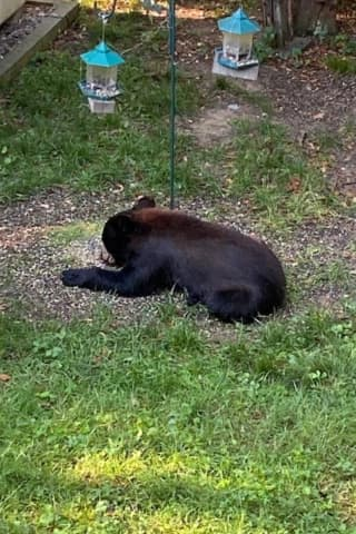 New Bear Sighting Reported In Area