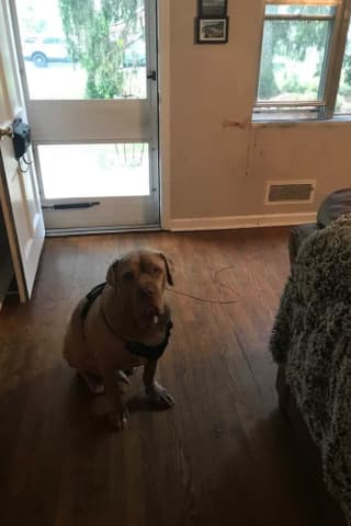 Dog Took A Bite Out Of Burglar In Ramsey: Report