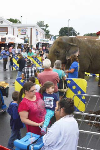 Beloved Elephant At Connecticut Fairs Dies At 54