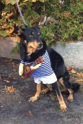 Ossining Pets Celebrate 'Howloween'