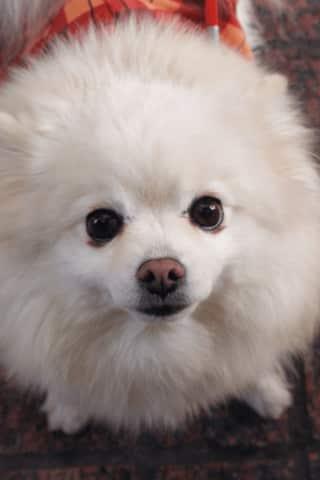 Woman Loses $500 In Puppy Scam, Darien Police Say