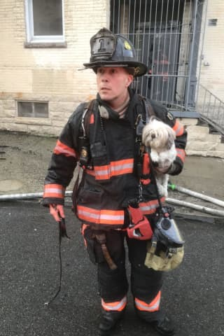 Two Dogs Rescued, Dozens Displaced After Fire Breaks Out At Apartment Complex In Westchester