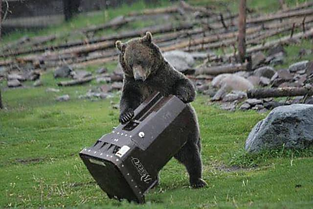 Black Bear Sightings In New City Prompt Police To Release Safety Tips | Clarkstown Daily Voice